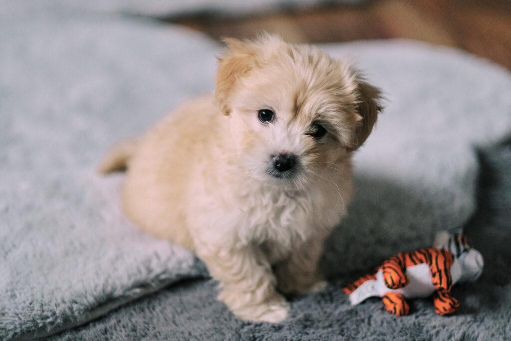 Ratgeber zum Thema Ernährung für Hunde